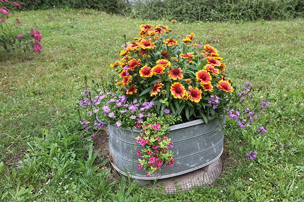 Bepflanzte Blechbadewanne